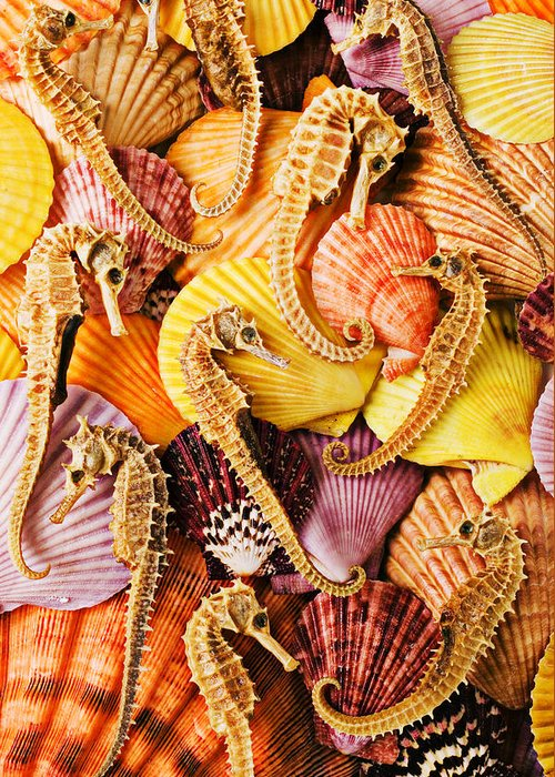 Seahorses Greeting Card featuring the photograph Sea Horses And Sea Shells by Garry Gay