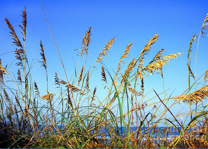 Sea Greeting Card featuring the photograph Sea Oats And Sea by Thomas R Fletcher