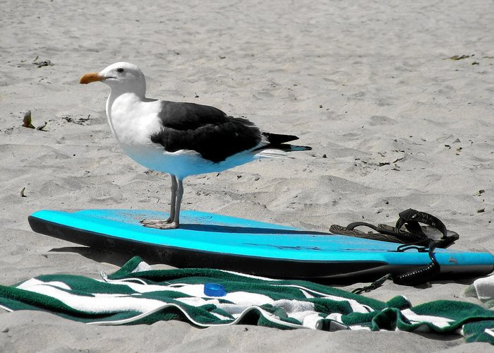 Bird Greeting Card featuring the photograph Seagull On A Surfboard by Christine Till
