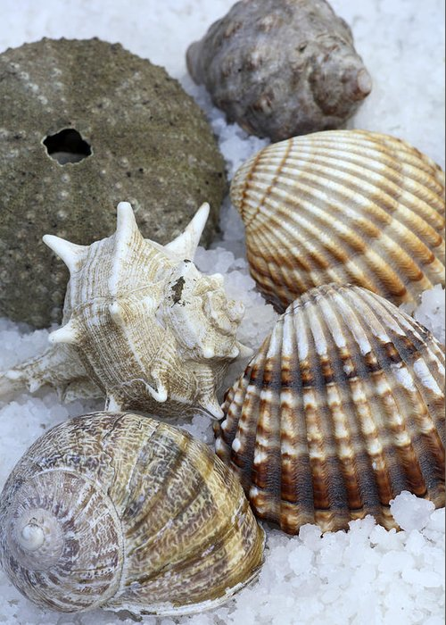 Sea Greeting Card featuring the photograph Seashells by Frank Tschakert