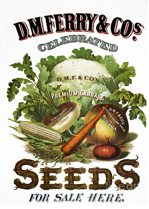 1880s Greeting Card featuring the photograph Seed Company Poster, C1800 by Granger