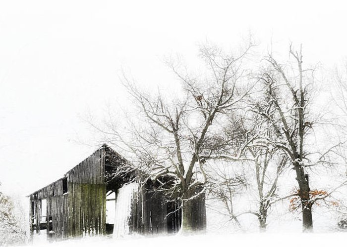 Barn Greeting Card featuring the photograph Shabby Barn by Kathy Jennings