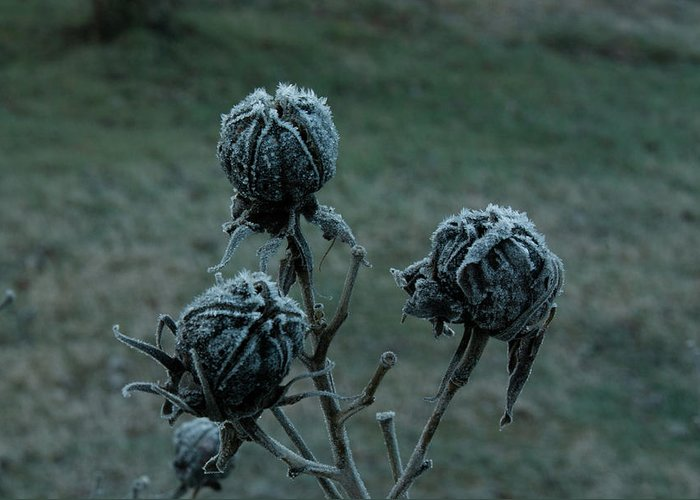 Morgan Greeting Card featuring the photograph Shadowy Frozen Pods From The Darkside by Douglas Barnett