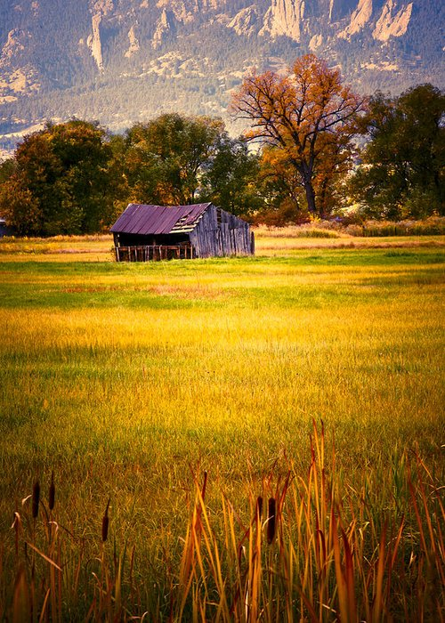 Shed Greeting Card featuring the photograph Shed In Sunlight by Marilyn Hunt