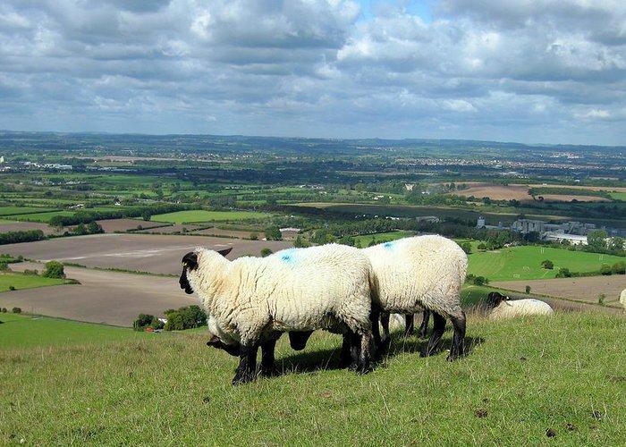 Sheep Greeting Card featuring the photograph Sheep At Westbury Tor by Kurt Van Wagner