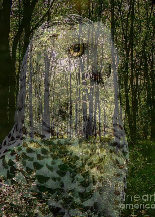 Collage Greeting Card featuring the photograph Silent Sentinel by Priscilla Richardson