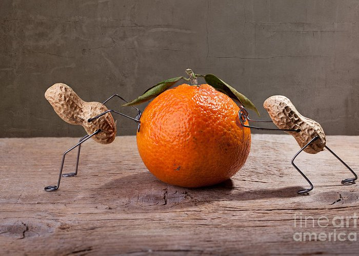 Peanut Greeting Card featuring the photograph Simple Things - Antagonism by Nailia Schwarz