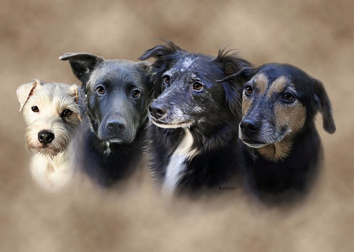 Dogs Greeting Card featuring the digital art Sis's Buddies by Barbara Hymer