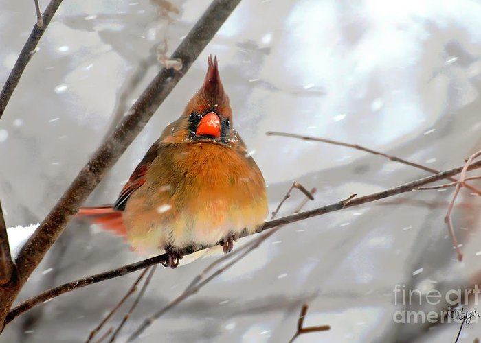 Bird Greeting Card featuring the photograph Snow Surprise by Lois Bryan