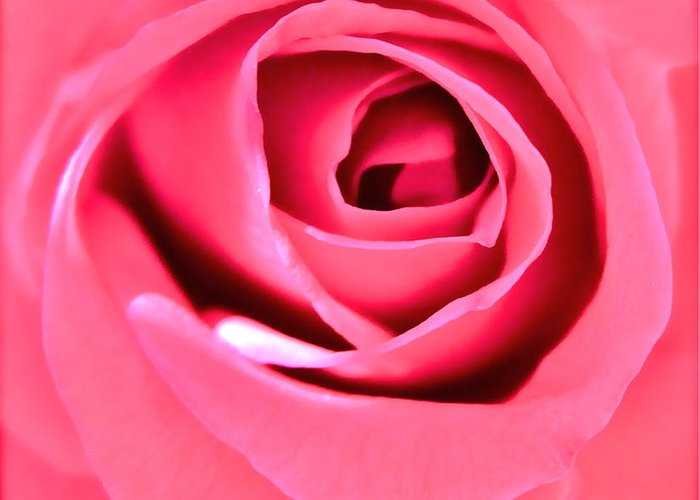 Photograph Of Pink Rose Greeting Card featuring the photograph Soul Searching by Gwyn Newcombe