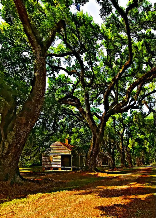Evergreen Plantation Greeting Card featuring the photograph Southern Lane by Steve Harrington