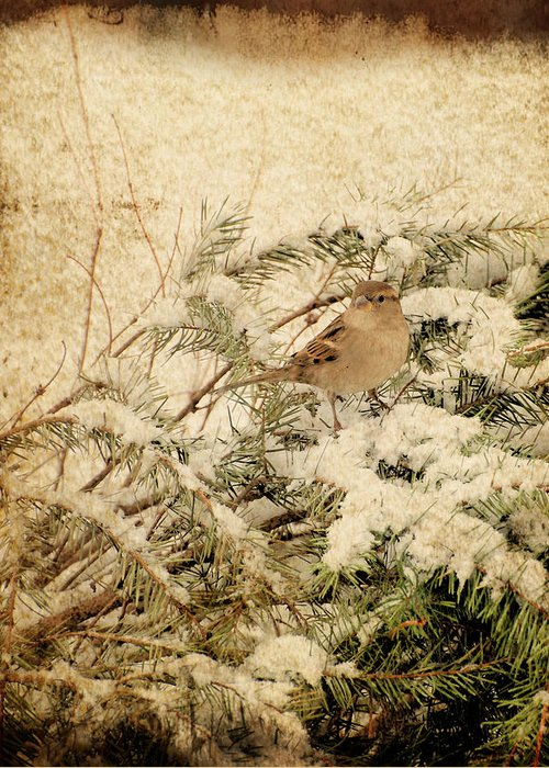 Bird Greeting Card featuring the photograph Sparrow In Winter I - Textured by Angie Tirado