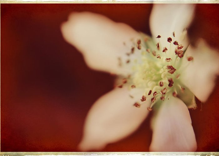 Macro Greeting Card featuring the photograph Spirit by Laurie Search