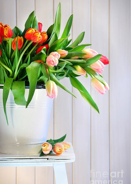Background Greeting Card featuring the photograph Spring Tulips On An Old Bench by Sandra Cunningham