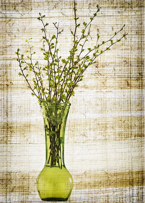 Spring Greeting Card featuring the photograph Spring Vase by Elena Elisseeva