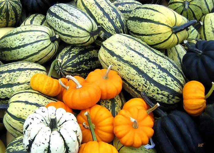 Squash Greeting Card featuring the photograph Squash Harvest by Will Borden