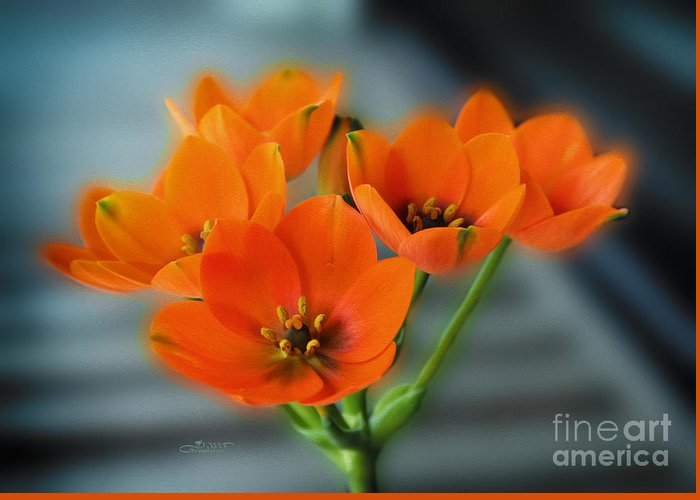 Photo Greeting Card featuring the photograph Star Of Bethlehem by Jutta Maria Pusl