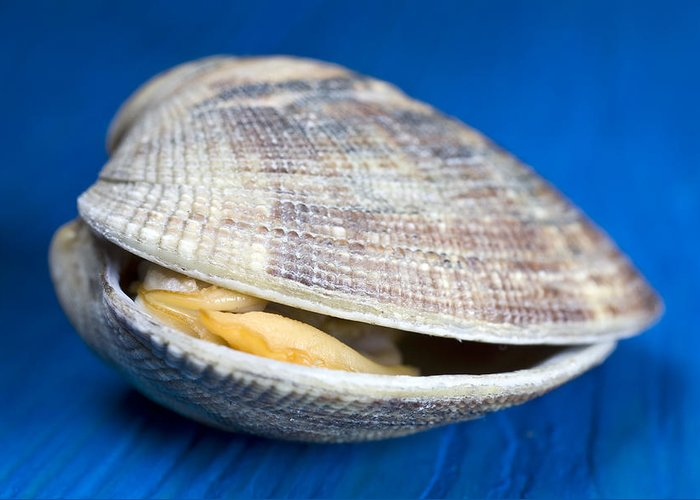 Steamed Clam Greeting Card featuring the photograph Steamed Clam by Frank Tschakert