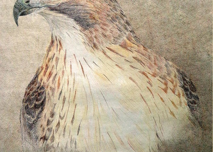 Red-tailed Hawk Greeting Card featuring the drawing Study Of The Red-tail Hawk by Leslie M Browning