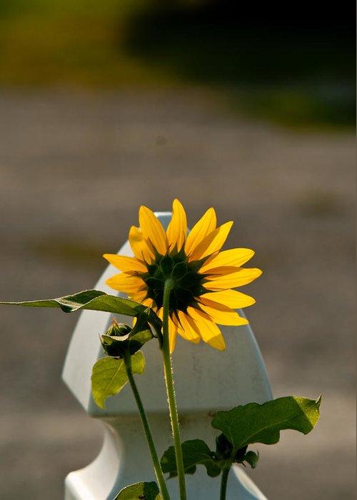 Sun Greeting Card featuring the photograph Sunflower Morning by Douglas Barnett