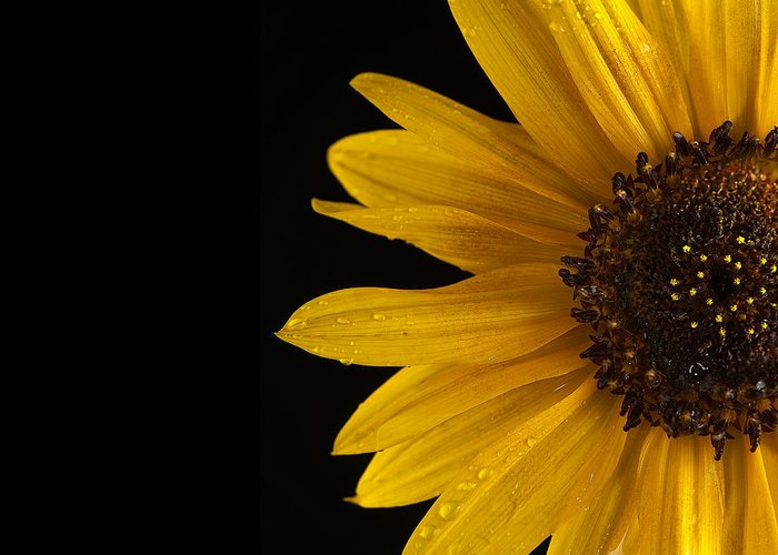Sunflower Greeting Card featuring the photograph Sunflower Number 3 by Steve Gadomski