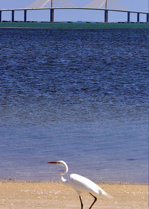 Sunshine Skyway Bridge Greeting Card featuring the photograph Sunshine Skyway Bridge With White Egret by Rose Hill