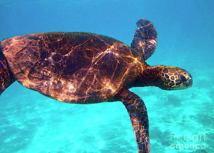 Hawaiian Sea Turtle Greeting Card featuring the photograph Suspended In Turquoise by Bette Phelan