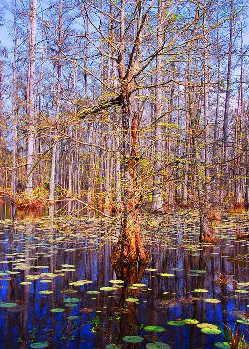Swamp Greeting Card featuring the photograph Swamp Tree by Susanne Van Hulst