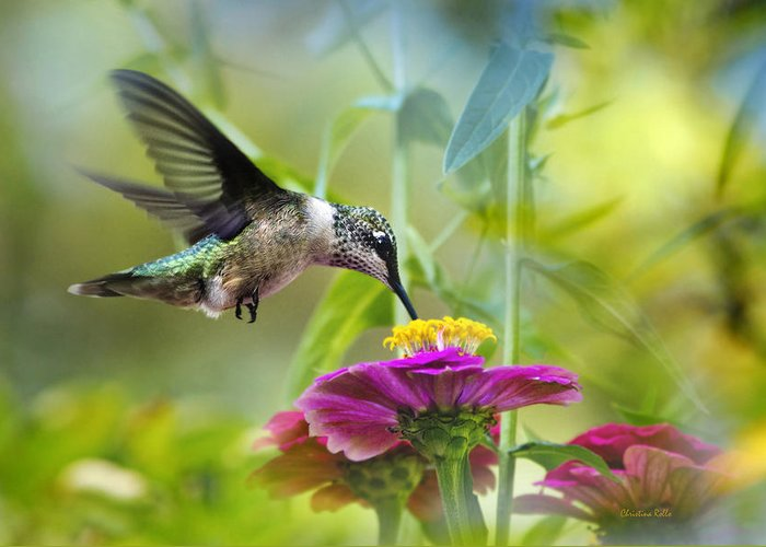 Hummingbird Greeting Card featuring the photograph Sweet Success by Christina Rollo