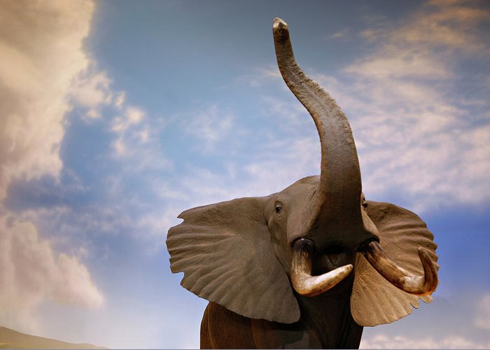Nature Greeting Card featuring the photograph Talking Elephant by Marilyn Hunt