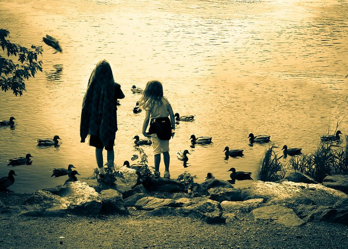 Kids Greeting Card featuring the photograph Talking To Ducks by Bob Orsillo