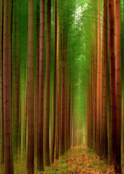 Forest Greeting Card featuring the photograph Tall Trees by Svetlana Sewell