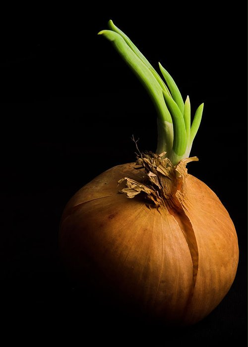 Onion Greeting Card featuring the photograph Tasty Onion by Thomas Splietker