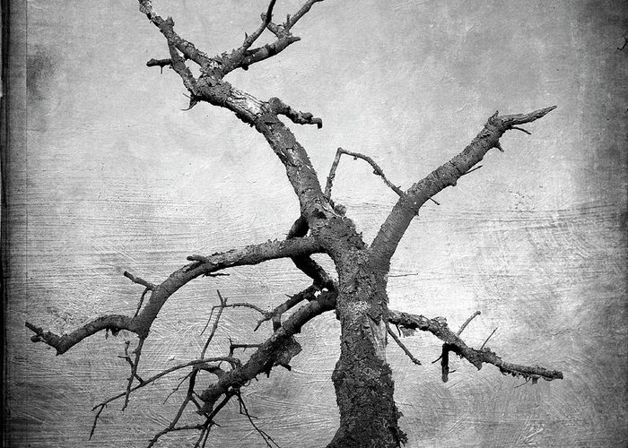 Bare Tree Greeting Card featuring the photograph Textured Tree by Bernard Jaubert
