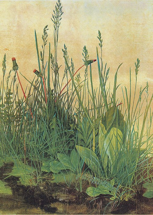 Albrecht Durer Greeting Card featuring the painting The Large Piece Of Turf by Albrecht Durer