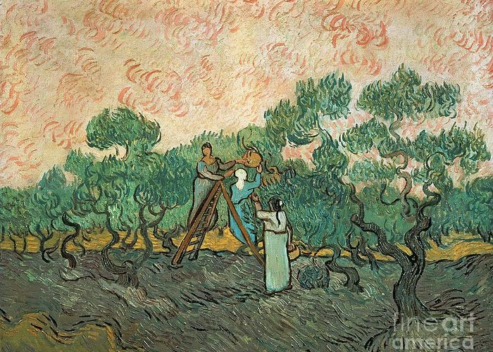 The Greeting Card featuring the painting The Olive Pickers by Vincent van Gogh