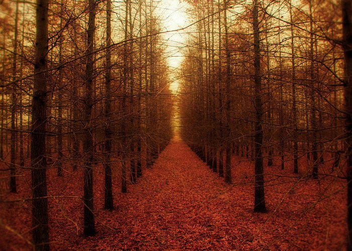 Forest Greeting Card featuring the photograph The Red Forest by Amy Tyler