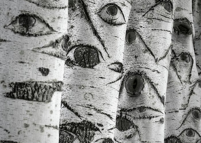 Trees Greeting Card featuring the photograph The Trees Have Eyes by Wim Lanclus