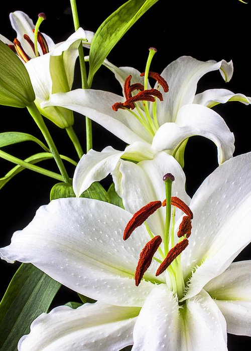 White Tiger Lily Greeting Card featuring the photograph Three White Lilies by Garry Gay