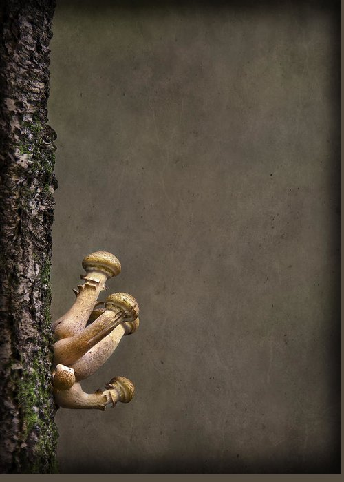 Fungi Greeting Card featuring the photograph Ties That Bind by Evelina Kremsdorf