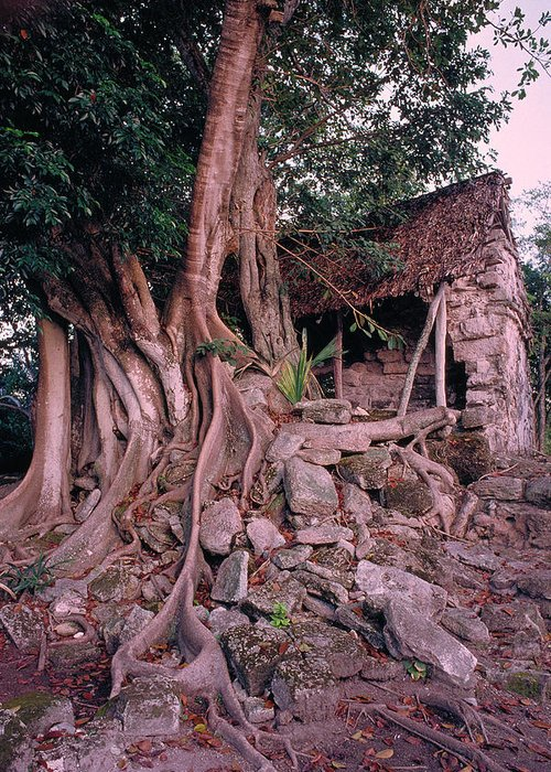 Tree Greeting Card featuring the photograph Tree And Ruins In Cozumel by Thomas Firak