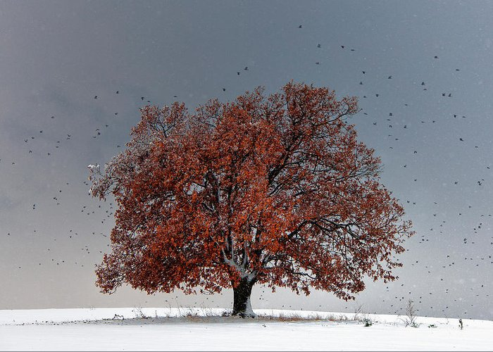 Bulgaria Greeting Card featuring the photograph Tree Of Life by Evgeni Dinev