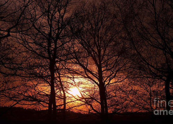 Sunset Greeting Card featuring the photograph Trees At Sunset by Michal Boubin