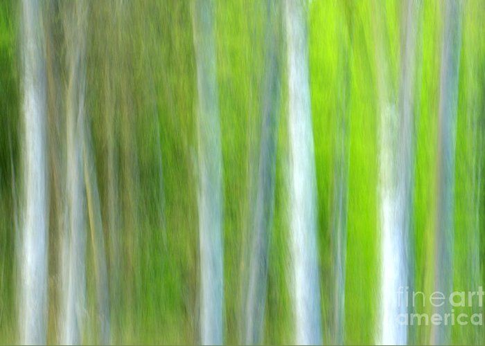 Trees Greeting Card featuring the photograph Trees by Silke Magino