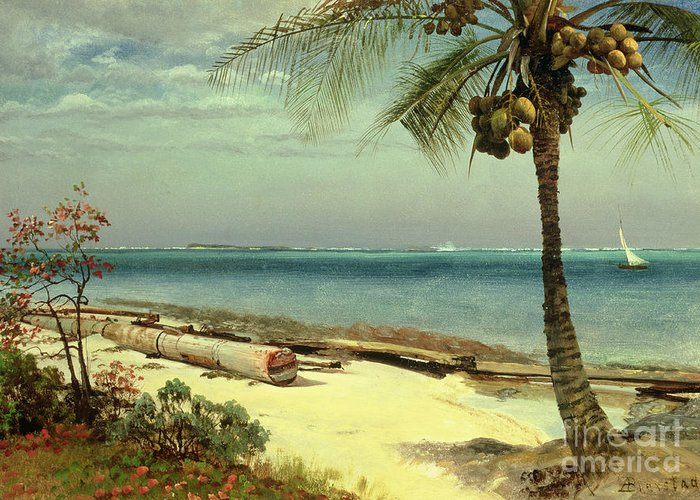 Shore; Exotic; Palm Tree; Coconut; Sand; Beach; Sailing Greeting Card featuring the painting Tropical Coast by Albert Bierstadt