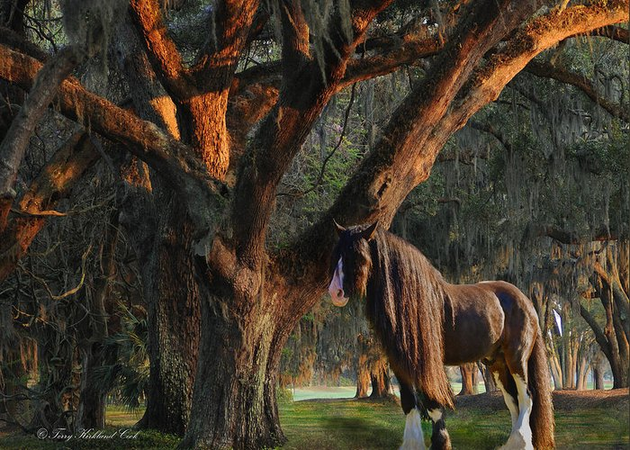 Equine Greeting Card featuring the digital art Two Majestic Souls by Terry Kirkland Cook