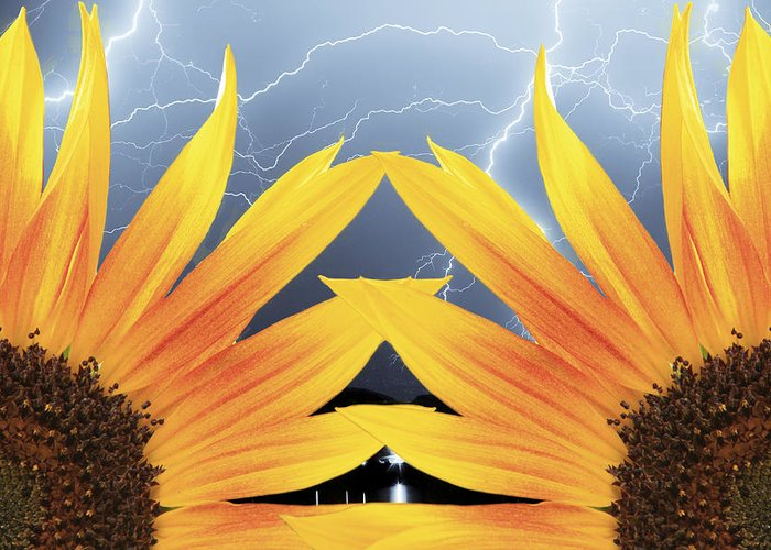 Sunflowers Greeting Card featuring the photograph Two Sunflower Lightning Storm by James BO Insogna