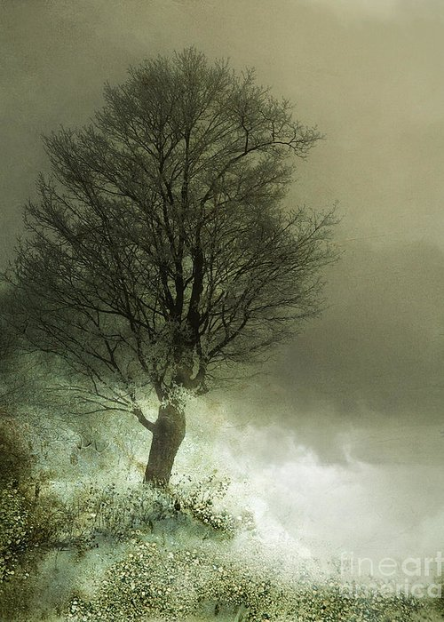 Tree Greeting Card featuring the photograph Upon The Windowsill Of Heaven by Jan Piller