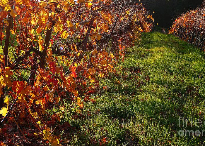 California Wine Country Greeting Card featuring the photograph Vineyard 13 by Xueling Zou