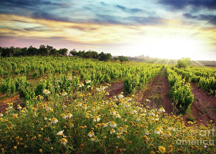 Agriculture Greeting Card featuring the photograph Vineyard by Carlos Caetano